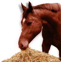 Pferd mit Heu